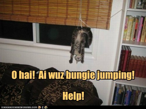 best of the week bungee bungee jumping caption captioned cat dangling Hall of Fame halp help ohai request string stuck upside down - 5681541632