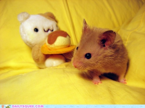 friends,friendship,hamster,itty bitty,small,stuffed animal