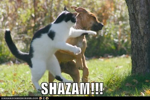 classics,dogs,fight,fighting,goggies,Interspecies Love,punch,punching,shazam,slap,slapping