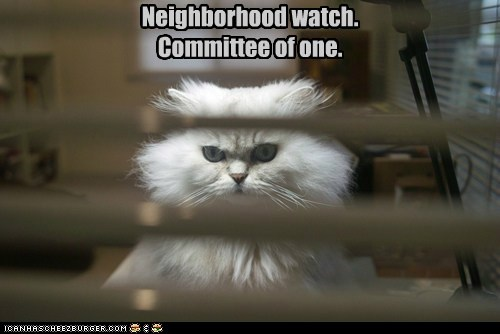 alone,best of the week,caption,captioned,cat,committee,Hall of Fame,menacing,neighborhood,neighborhood watch,one,singular,watch