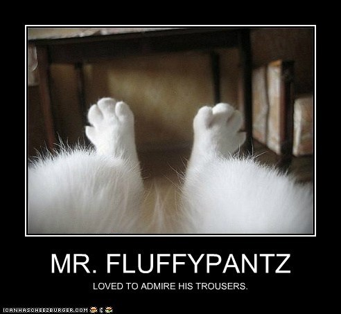 MR. FLUFFYPANTZ LOVED TO ADMIRE HIS TROUSERS.