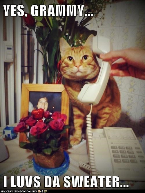 cat,conversation,grandma,I Can Has Cheezburger,phone,sweater,telephone