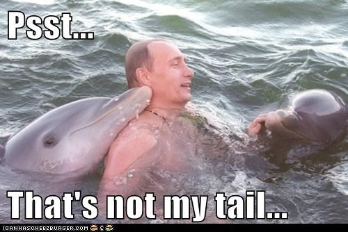 dolphins,political,Pundit Kitchen,russia,Swimming With Dolphins,Vladimir Putin