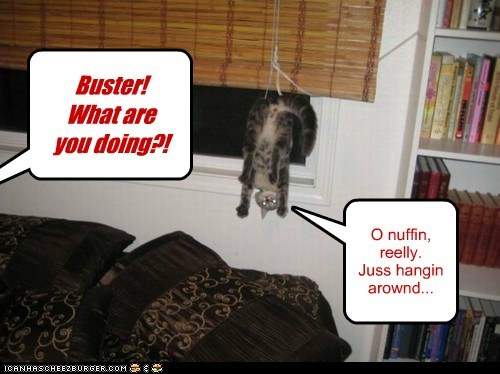 Buster! What are you doing?! O nuffin, reelly. Juss hangin arownd...
