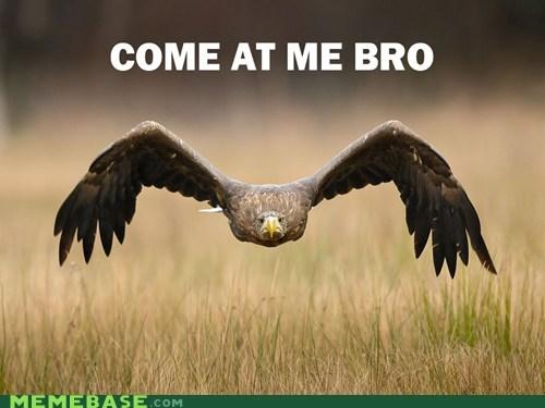 birds come at me eagle flight - 5682616064
