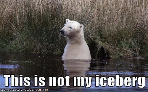 animals huh iceberg lost polar bear where am i - 5682636800