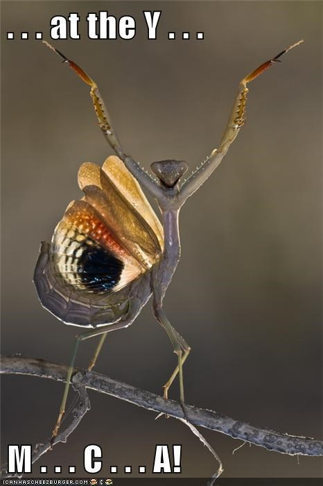 best of the week Hall of Fame insects mantis praying mantis ymca - 5682739712