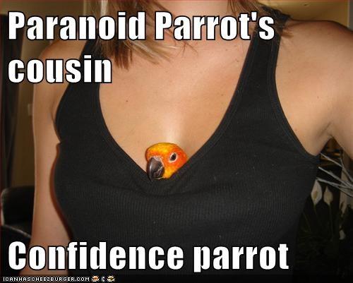 caption captioned confidence cousin paranoid Paranoid Parrot parrot - 5683001344