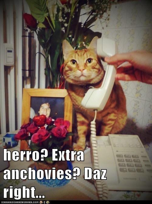 Herro Extra Anchovies Daz Right I Can Has Cheezburger