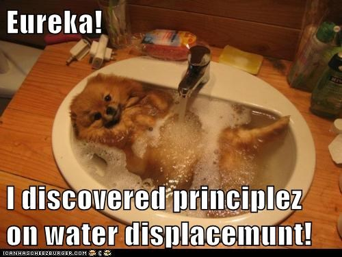 euclid,eureka,math,pomeranian,science,sink,water,water displacement