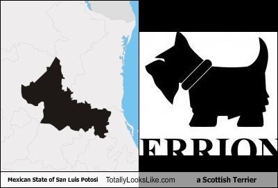 dogs funny geography mexico san luis potosi scottish terrier state TLL
