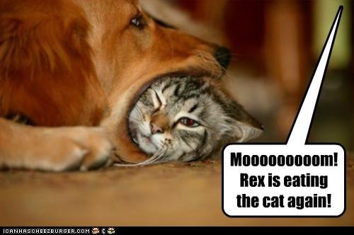 Mooooooooom! Rex is eating the cat again!