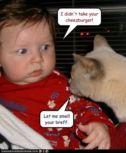 Cheezburger Image 5683640064