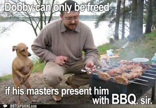 animals,barbecue,bbq,Dobby,dogs,eat,food,Harry Potter,noms