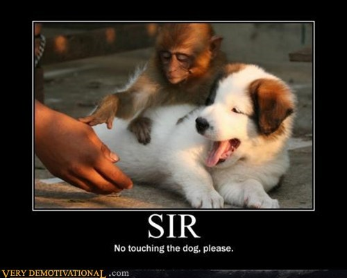 dogs hilarious monkey no touching sir - 5684028160