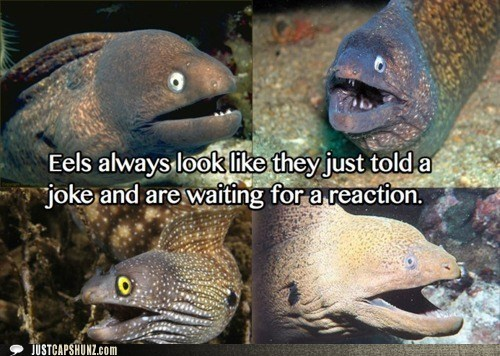 animals eels facial expression joke - 5684141056