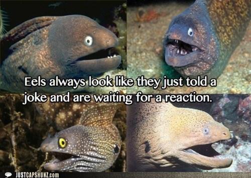 animals eels facial expression joke - 5684141056