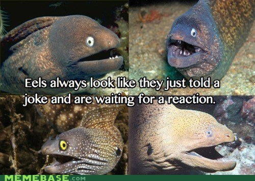 compliments eels fish jokes Memes stories the best - 5684142592