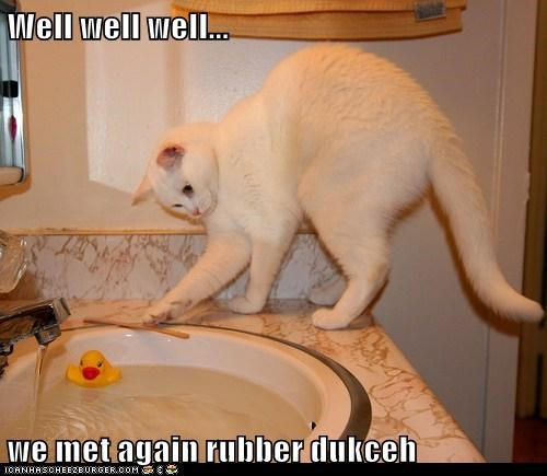 again,bad idea,caption,captioned,cat,do not want,enemies,foes,meet,rubber ducky,sink,toy,water,well well well
