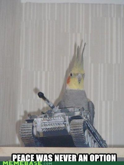 birds cockatoo Memes tank - 5684665600