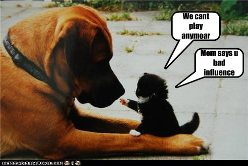 adorable,bad influence,best of the week,cat,dogs,friends,Hall of Fame,kitten,love,mixed breed,whatbreed