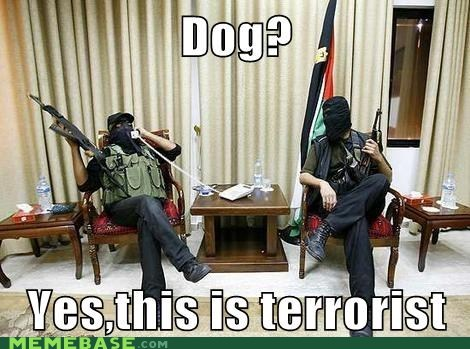 Memes,phone,terrorist,this is dog