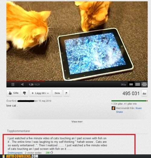 animal AutocoWrecks cat Cats comment entertaining entertainment g rated Hall of Fame ipad mobile phones youtube