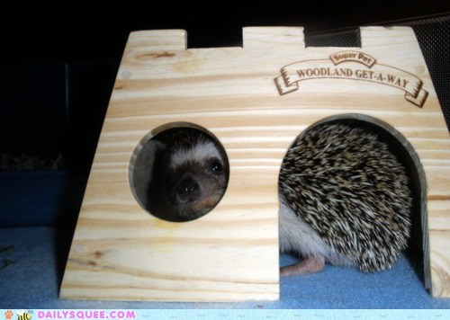 acting like animals castle hedgehog hiding king kingdom protected ruler - 5685922304
