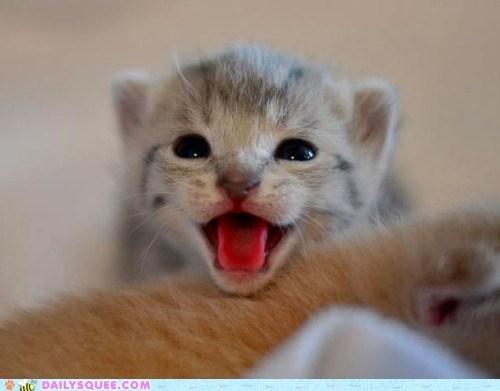 Happy Cat's Baby Photo