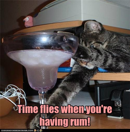 caption captioned cat do want drunk flies Rum time when - 5686791424