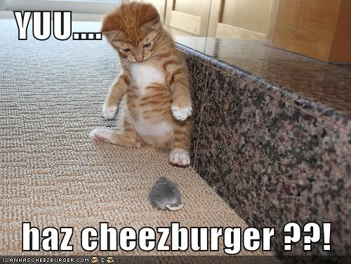 Cheezburger Image 5687473408