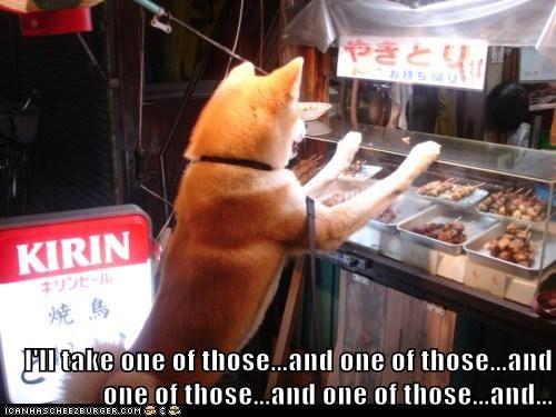 eat eating food food order noms shiba inu - 5688643328
