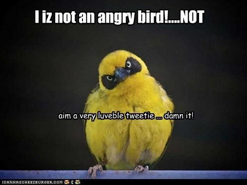 I iz not an angry bird!....NOT aim a very luveble tweetie ... damn it!