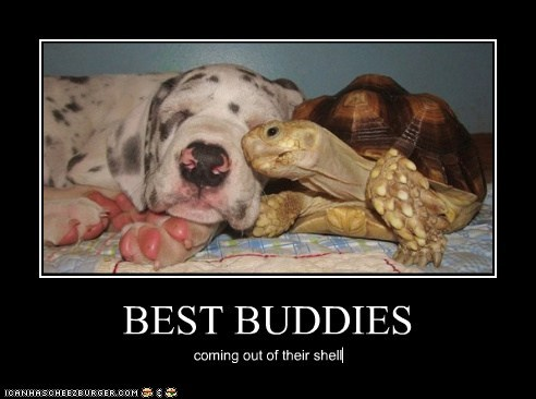 BEST BUDDIES coming out of their shell