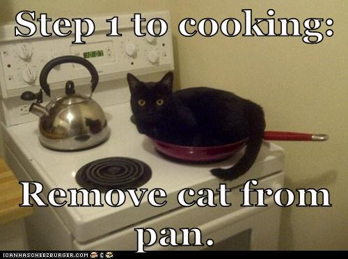 cat cooking I Can Has Cheezburger kitchen pan stove