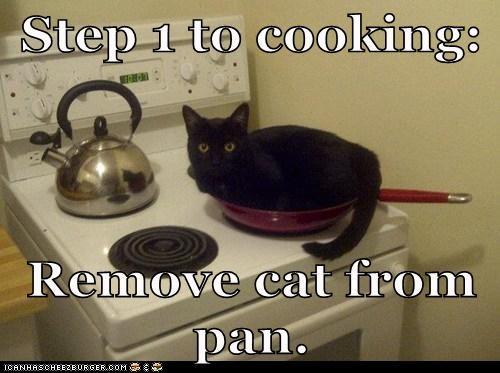 cat cooking I Can Has Cheezburger kitchen pan stove - 5688899328