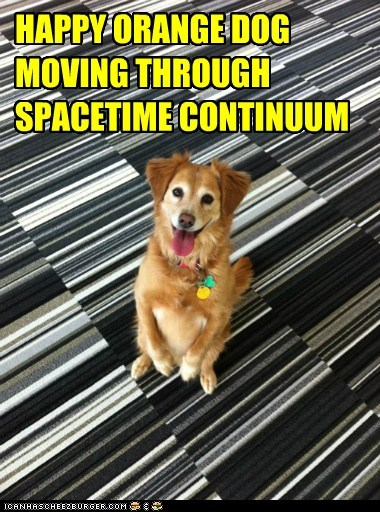 happy dog science space time space-time continuum tongue tongue out whatbreed - 5689250048