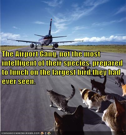 airport,best of the week,big,bird,caption,captioned,cat,catch,Cats,confused,do want,dumb,gang,Hall of Fame,misinterpretation,noms,plane,prey,size