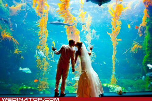aquarium,funny wedding photos,love infested waters