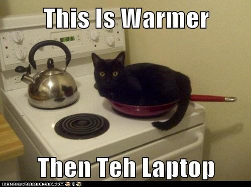 best of the week,better,caption,captioned,cat,comparison,do want,frying pan,laptop,like,stove,this,warmer
