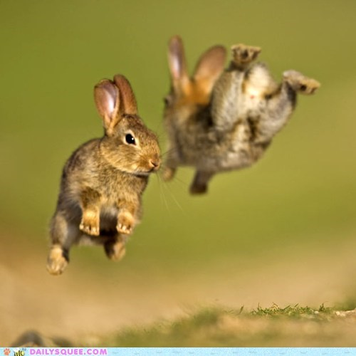 acting like animals bunnies bunny Hall of Fame happy bunday hopping jumping playing rabbit rabbits - 5689574400