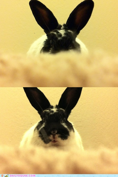 bunny,game,happy bunday,never gets old,peekaboo,peeking,rabbit