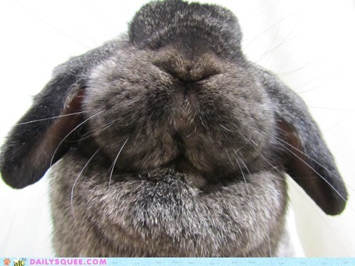 adorable boopable bunny closeup focus happy bunday nose rabbit zoom