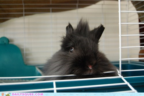 baby,bedhead,bunny,happy bunday,morning,rabbit,waking up