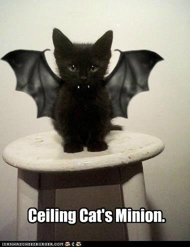 Ceiling Cat's Minion.