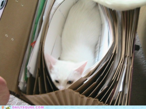 acting like animals alphabetized cat conspicuous f file folder Hall of Fame hiding hungry letter - 5689836288