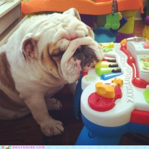 acting like animals asleep bulldog composing excuse explanation keyboard lazy sleeping virtuoso work working - 5689852160