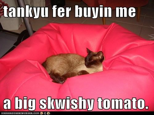 big buying caption captioned cat present siamese squishy thanks tomato