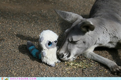 adult cuddling friend friendship kangaroo sleeping snuggles snuggling stuffed animal - 5690128384