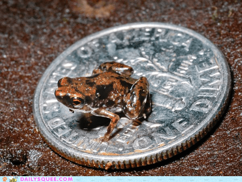 comparison,frog,Hall of Fame,quarter,size,smallest,tiny,vertebrate